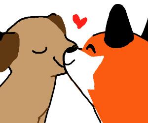 Fox & Dog fall in LOVE
