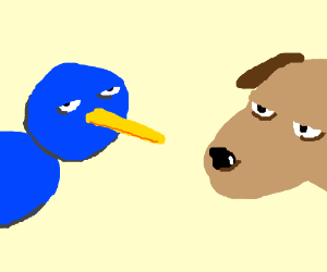 blue bird & brown dog are bored