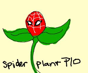 Spider-Plant PIO