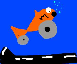 a fish on wheels O.o