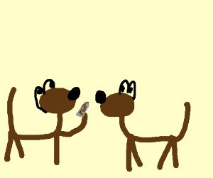 Dog takes crack
