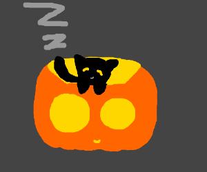 A black cat in a sleeping jack o lantern
