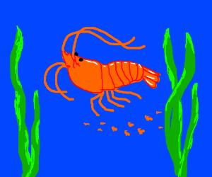 About 12 shrimp, I estimate.