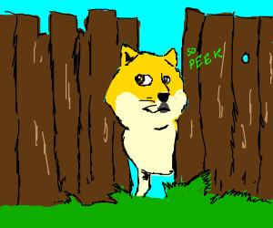 Yellow Dog Peeks Through Fence