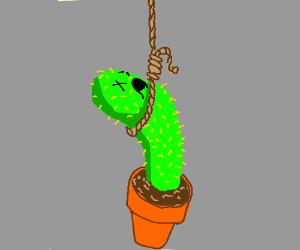 A cactus hanging itself