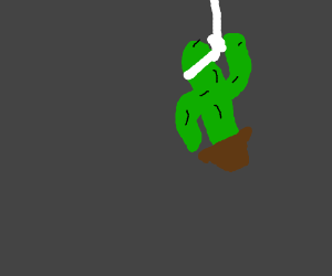 Cactus hanging itself.