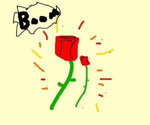 roses exploding