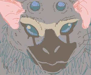 4 eyed rat ape