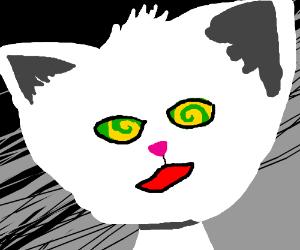 White cat getting hypnotized