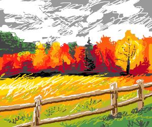 A cornfield in the fall