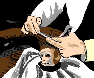 Giving Monkey a haircut