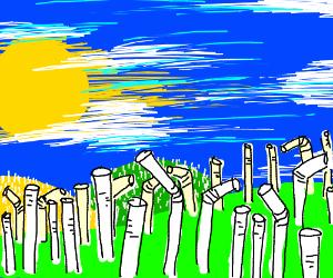 Fields of straw
