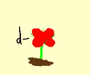 drose