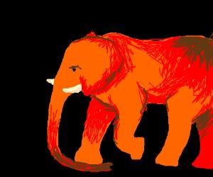 Orange elefant uses trunk to walk on