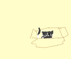 floof kitteh in box