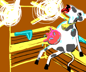 cow sweating in the steam room