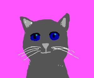 a grey kitten