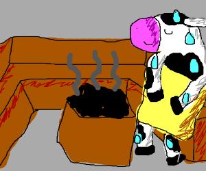 Cow in a sauna