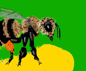 Bee PIO