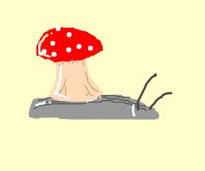 mushroom snail