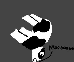 A cow going moooom