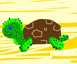 cactus turtle