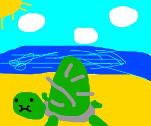 cacti turtle