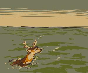 Deer at Sea