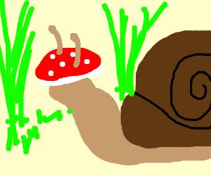snail with mushroom hat