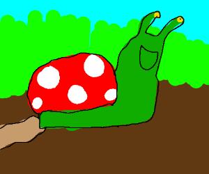 mushroom-snail