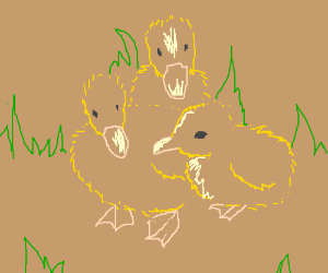 3 Cute little Ducklings