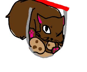 brown cat stuck inside a cookie jar