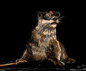 """Harry """"Otter"""" Potter"""