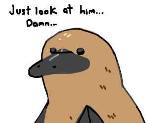 Reasons why u should marry a platypus pt 2