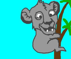 Simba is a koala