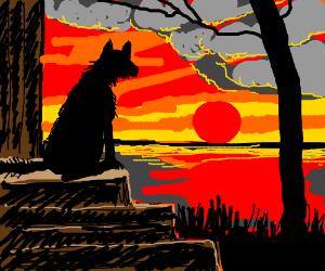 Dog looks at a beautiful sunset