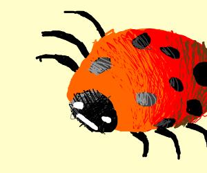 Zealous Ladybug