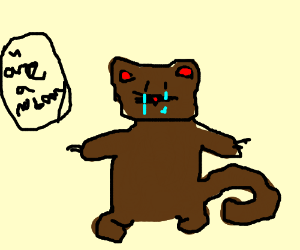 Brown cat crying. Is called a 'nobody'
