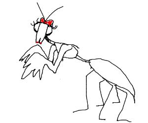 Pretty Lady Praying Mantis