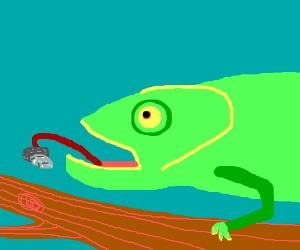 chameleon eating bug