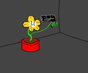 Suicidal flowey