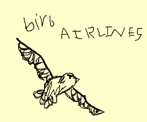 Thank you for choosing bird airlines!