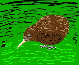 A kiwibird? Some sort of brown bird.