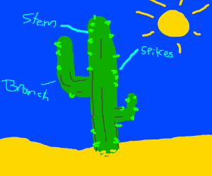 anatomy of a cactus - drawing by Smoshy :v
