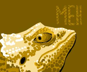 apathetic Lizard