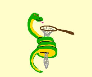 Snake tries to strangle a net