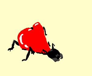 heart shaped bug