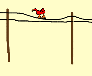 Red bird on a telephone wire