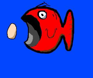 wierd fish wanting to eat an egg