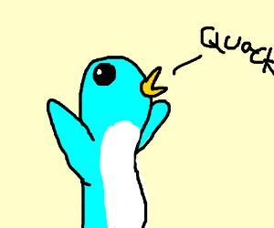 Blue penguin quacking